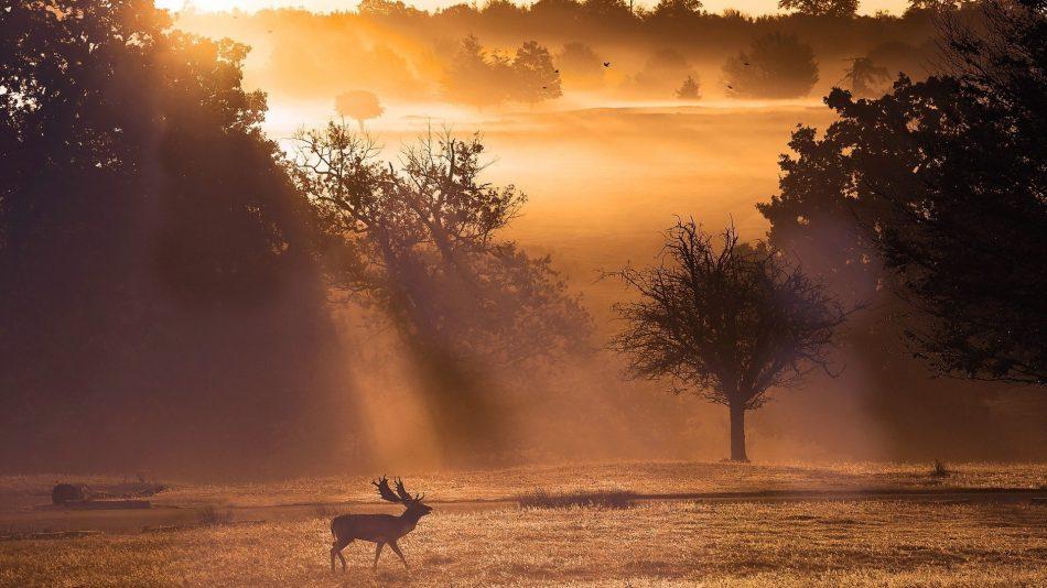 animals-sunrise-fog-light-sunset-sunbeam-bright-sunlight-fields-trees-nature-landscapes-elk-antlers-images-photo-animal-1920x1080